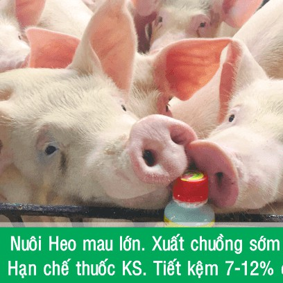 che pham sinh hoc Chan Nuoi vo beo, khong mui hoi 5