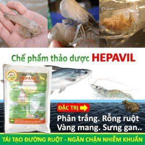 chế phẩm thảo dược hepavil trị bệnh rỗng ruột, phân trắng, vàng mang, sưng gan cho tôm, cá, ếch