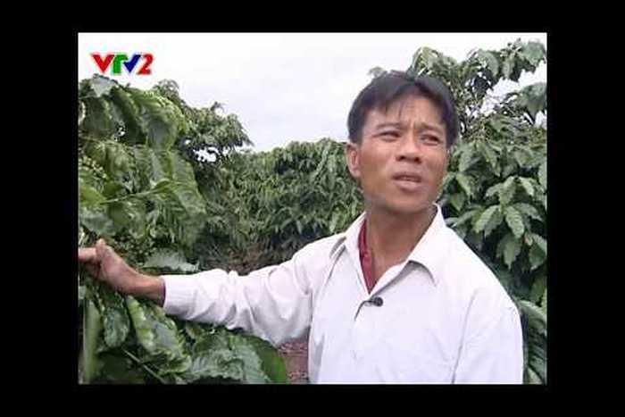 Chế phẩm sinh học cho cây Cà phê tại Gia Lai