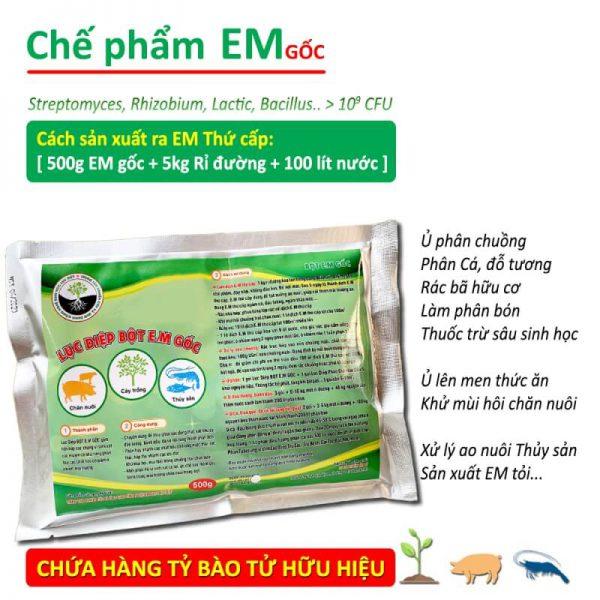 che pham sinh hoc em goc dang bot (1)