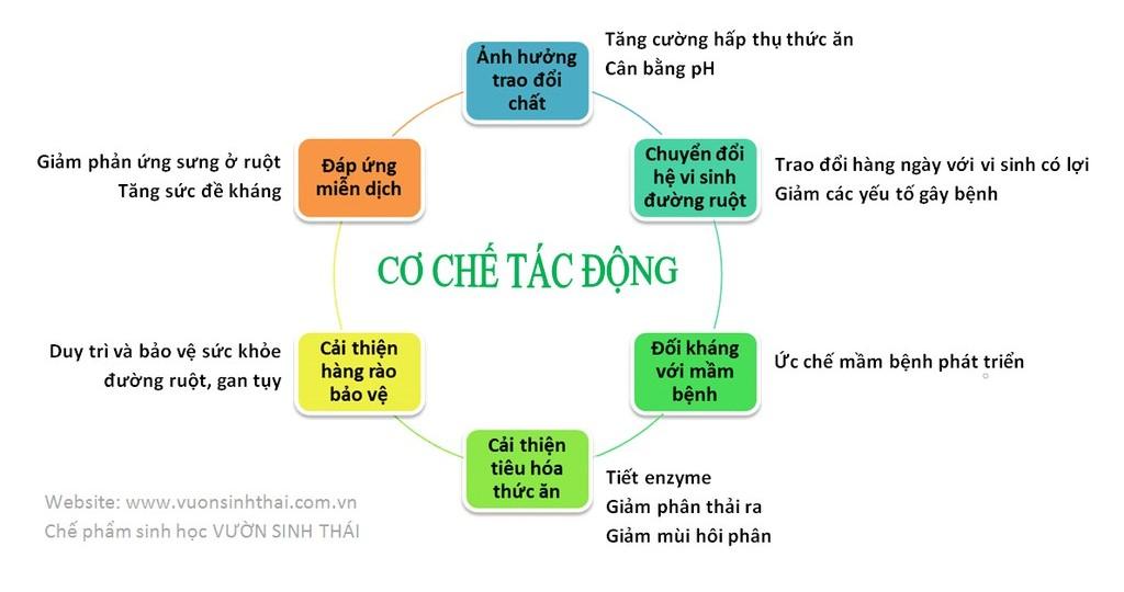 he-pham-sinh-hoc-hoat-dong-vuonsinhthai
