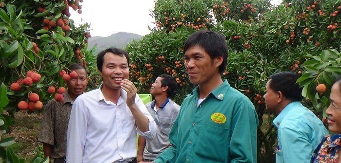 Hiệu quả sử dụng Chế phẩm sinh học Vườn Sinh Thái trên Cây Vải tại Lục Ngạn