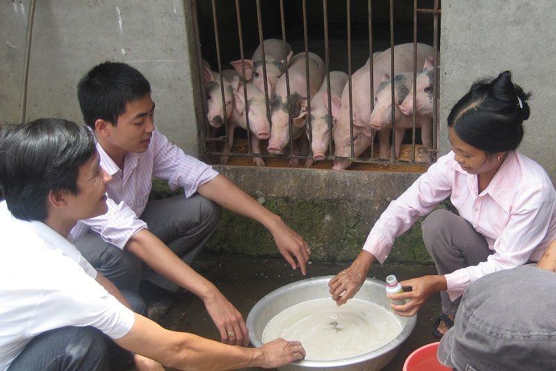 Hiệu quả từ các mô hình nông nghiệp ứng dụng Chế phẩm Vườn Sinh Thái tại Tây Nguyên