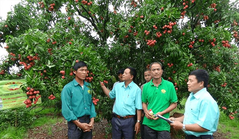 Lợi ích của cây trồng khi sử dụng Chế phẩm sinh học VƯỜN SINH THÁI