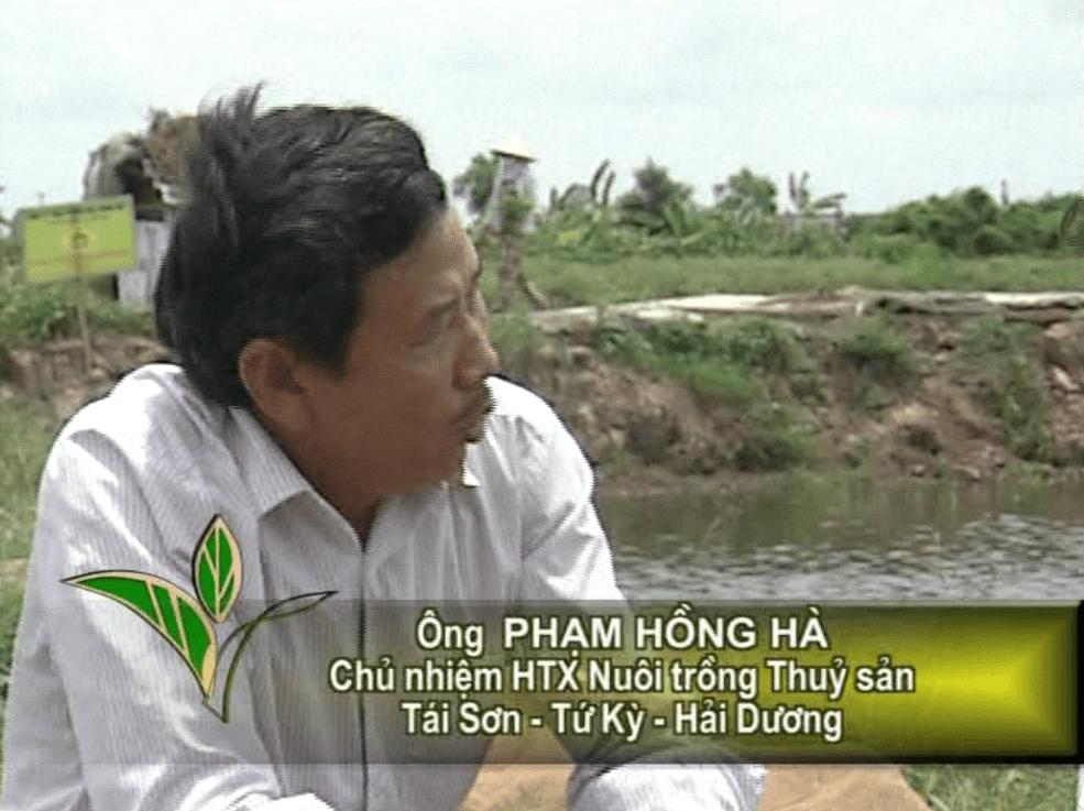 Mô hình nuôi cá của Ông Phạm Hồng Hà - Tứ kỳ, Hải Dương
