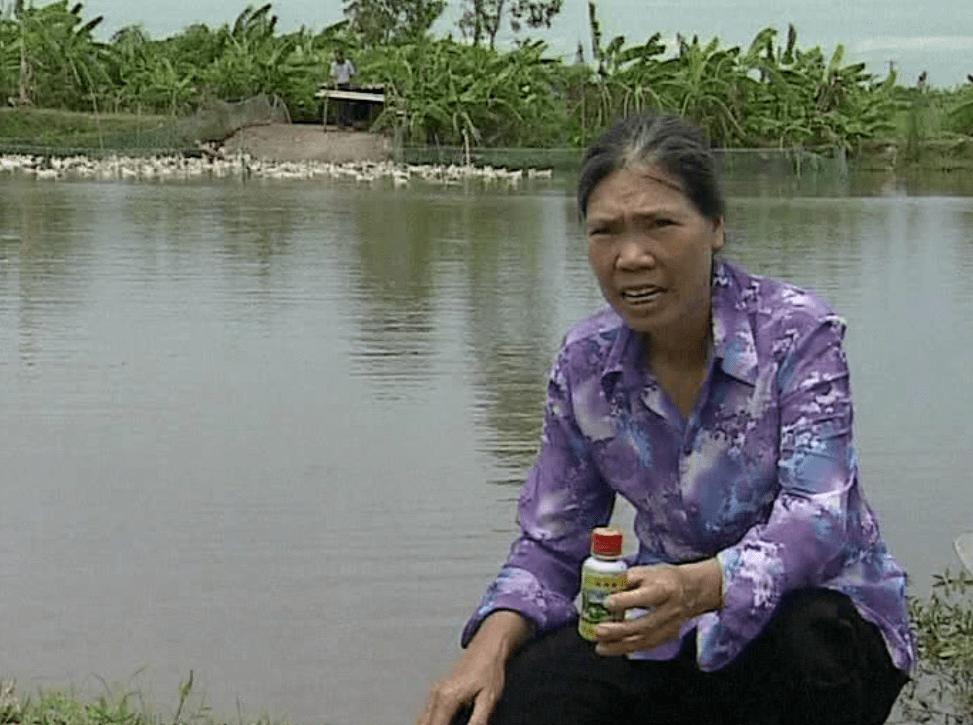 Ao nuôi cá của  Bà Mai Thị Chín - Quỳnh Phụ, Thái Bình