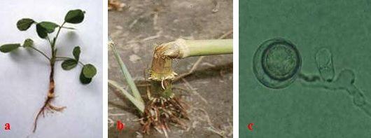 Vi sinh vật gây bệnh trong đất