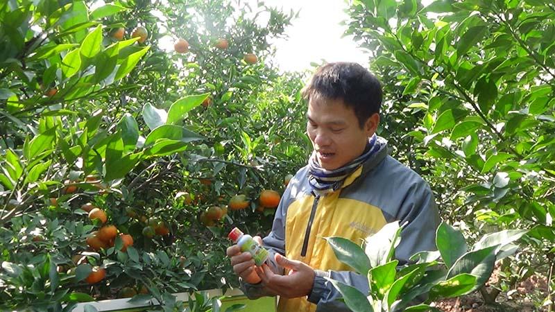 Kỹ thuật trồng và chăm sóc cam đường canh hiệu quả nhấtKỹ thuật trồng và chăm sóc cam đường canh hiệu quả nhất