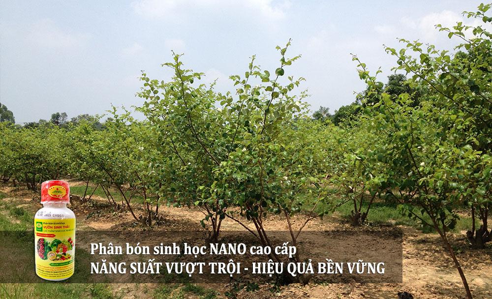 QUY-TRINH-su-dung-phan-bon-sinh-hoc-cho-cay-tao-ta