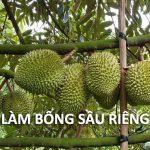 lam-bong-sau-rieng